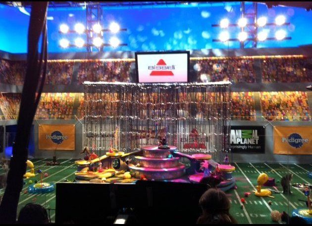 The set at New York City's Chelsea Studios, prepped and ready for the 20 kittens of the Kitten Halftime Show.