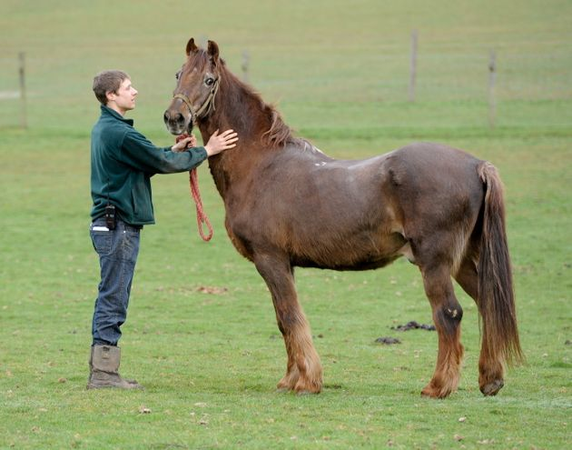 Shayne 51 World S Oldest Horse Photo Huffpost