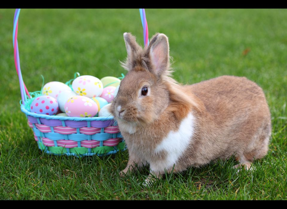 """Bunnies can live seven to 10 years -- and some even hit their teens. """"This is not a quick fix for a lonely child,"""" Cotter say"""
