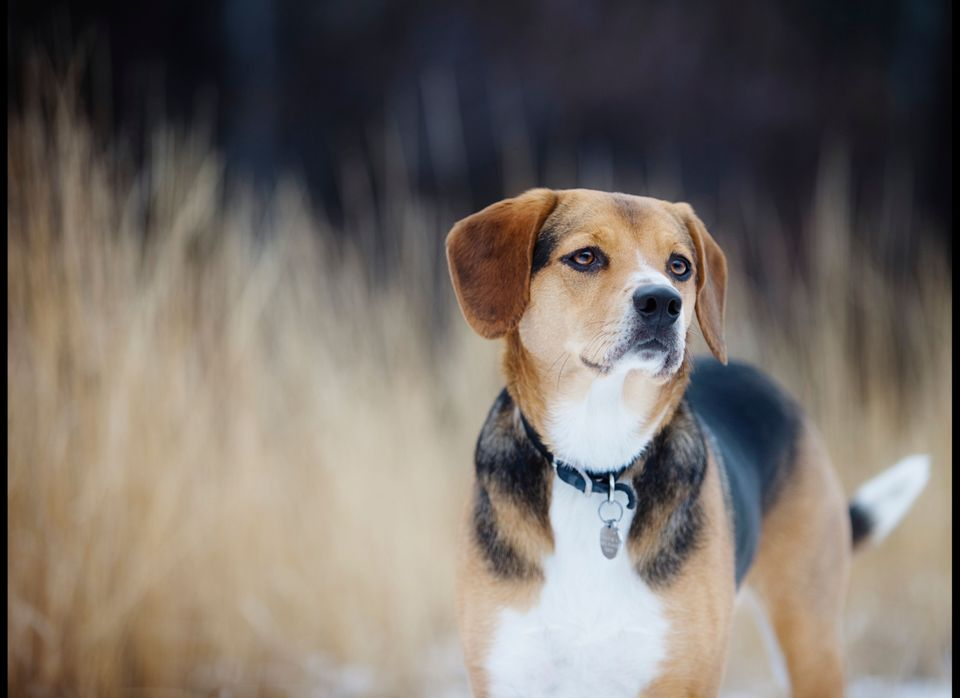 Some Dog Breeds More Likely To Snag A Date For Men Women