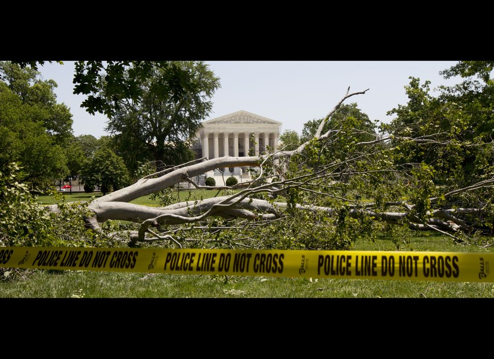 An American beech tree lies on Capitol Hill grounds in Washington, Saturday, June 30, 2012, in front of the U.S. Supreme Cour