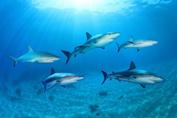 sharks in the ocean  composite