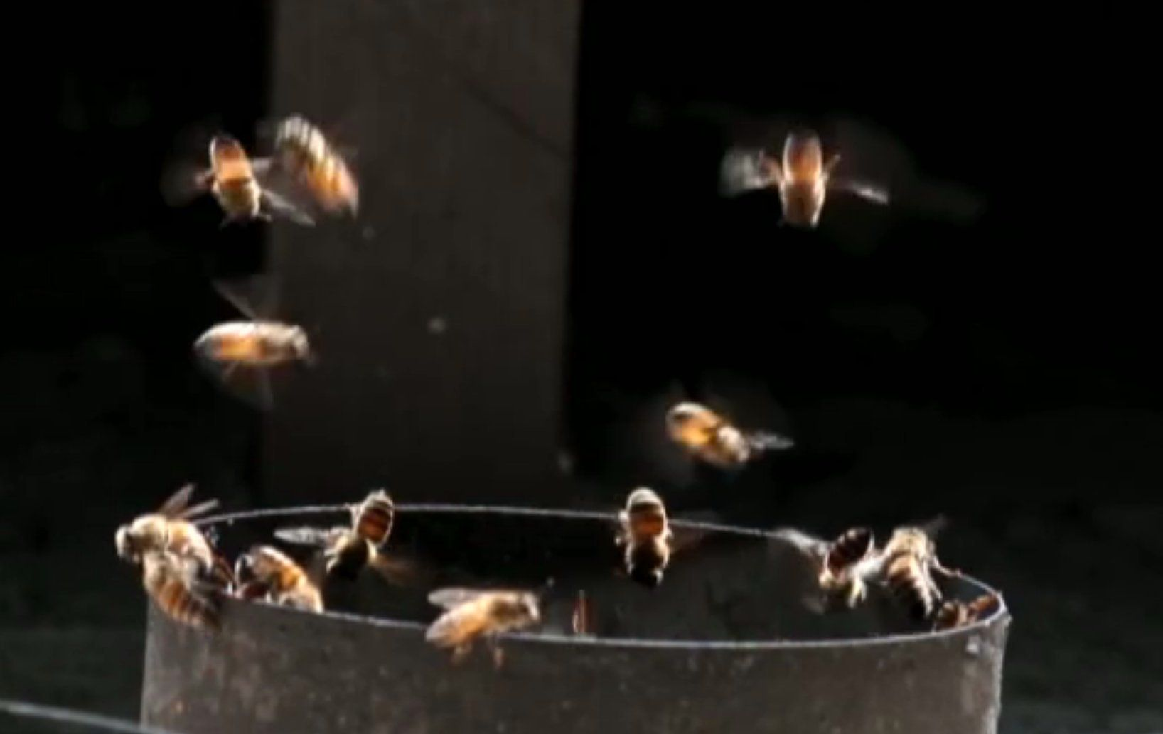 Fruitless Fall The Collapse Of The Honey Bee And The Coming Agricultural Crisis