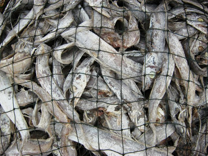 process of making dry fish in...