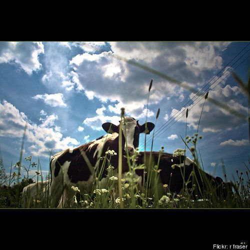 10 Things You Should Know About Raw Milk | HuffPost