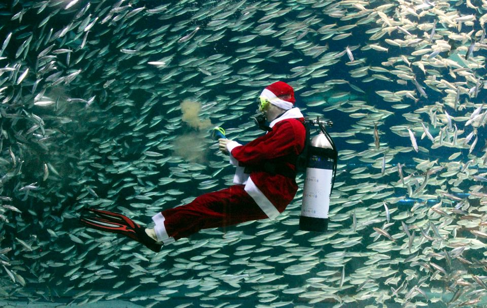Dressed in a Santa Claus outfit, a diver feeds sardines at the Coex Aquarium in Seoul, South Korea, Tuesday, Dec. 11, 2012. (
