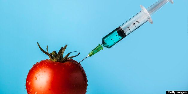 Genetically modified tomato.