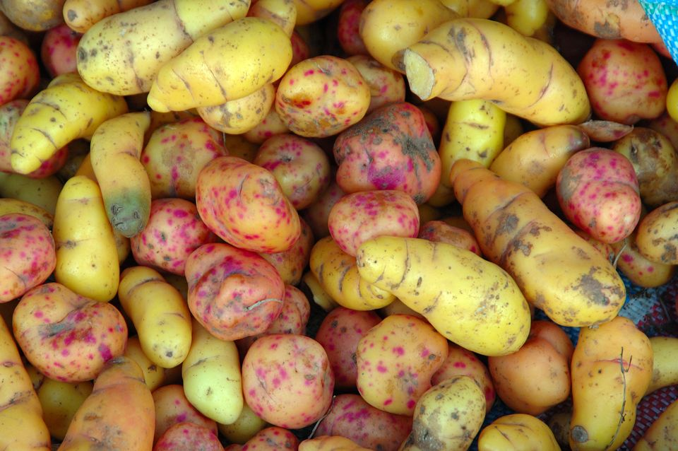 Though this colorful root vegetable was originally cultivated in the Andes of South America, it is also sometimes called the