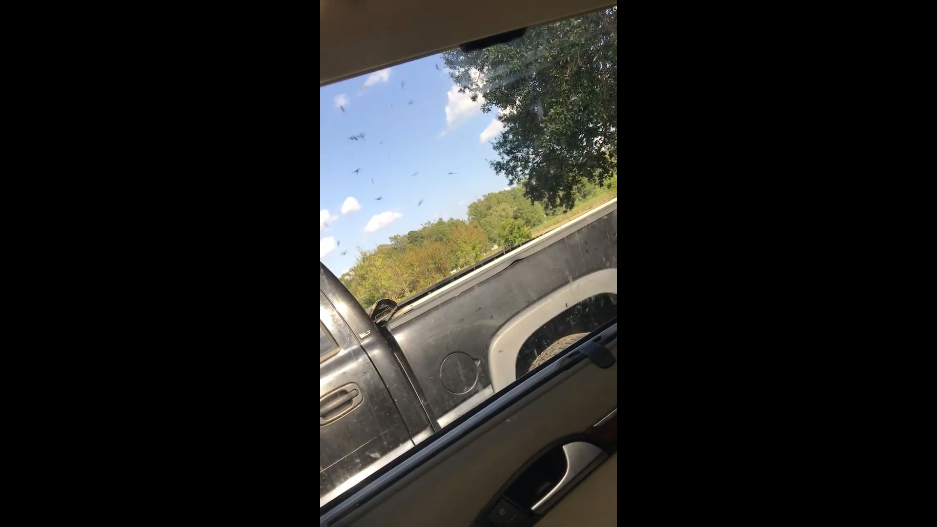 A video taken in North Carolina shows giant mosquitoes swarming a womans car