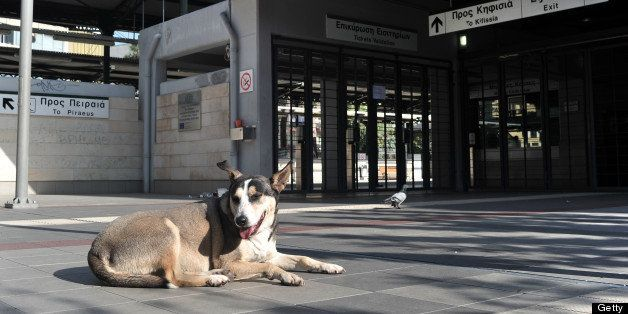A dog sits in an empty train station in Athens, during a 24-hours strike by subway and city rail employees to protest the new