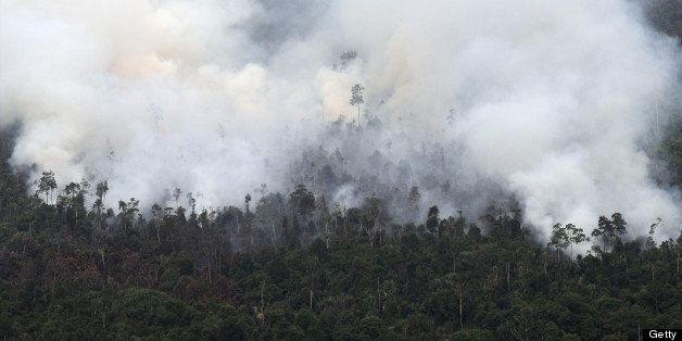 Thick smoke from raging forest fires rise in Pelalawan regency in Riau province located in Indonesia's Sumatra island on June