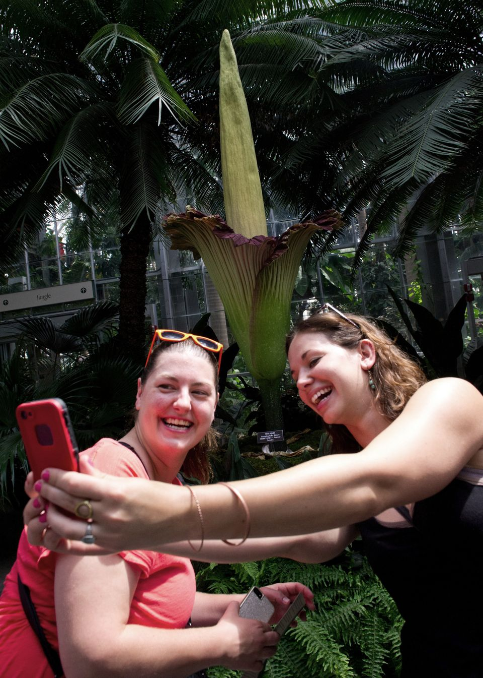 Carrie Dgzwil (left) and Casey Dumasius take their photo in front of the titan arum plant (Amorphophallus titanum), also know