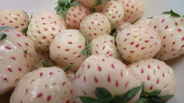 10 Fantastical Hybrid Fruits Worth Knowing (PHOTOS) | HuffPost