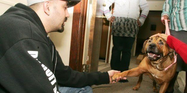 Detroit's Stray Dog Problem Fought By Rescue Groups As