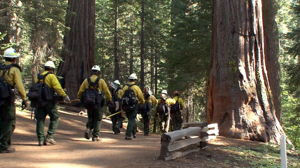 Firefighters enter a grove of giant sequoias in Yosemite National Park in this photo made on Sunday, Aug. 25, 2013, and relea