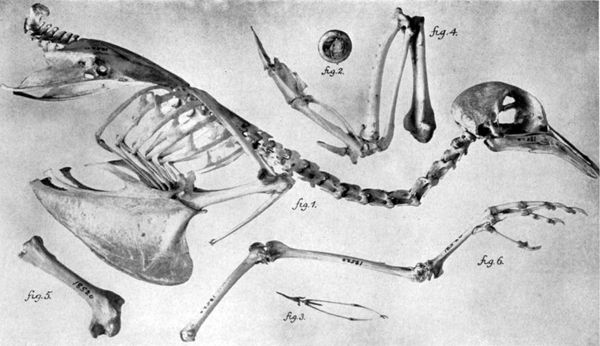 The passenger pigeon may have once constituted 25 to 40 percent of the bird population in what is now the U.S., according to