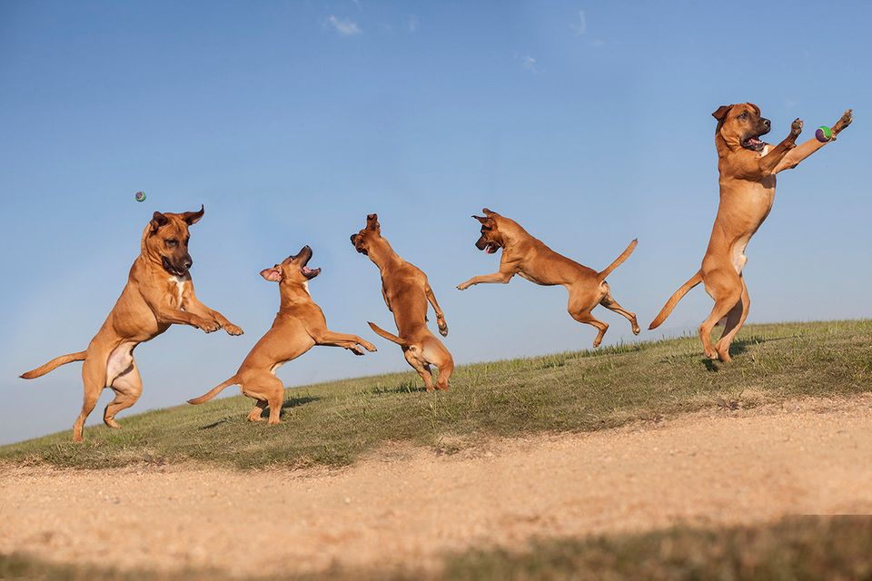 "Jumpin' Bean.  ""Landfill Dogs"" series by Shannon Johnstone.  <a href=""http://www.shannonjohnstone.com/landfill_dogs/landfill_"