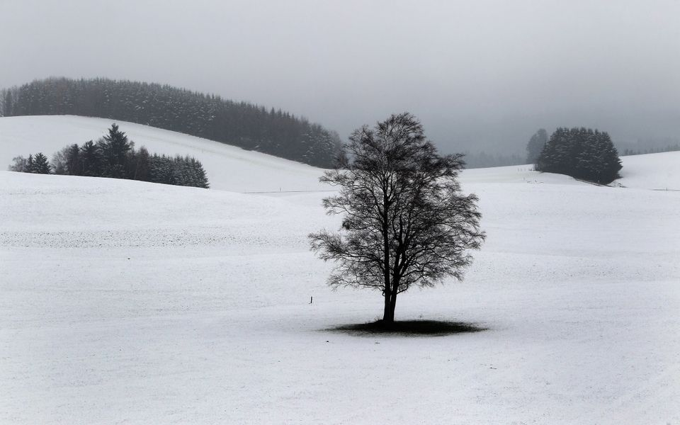 A tree stands in a snow-covered field near Nesselwang southern Germany, Sunday Nov. 24, 2013. Weather forecasts predict chang