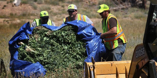 LYONS, CO - SEPTEMBER 01:  Boulder county workers push a load of seized marijuana for disposal on September 1, 2010 near Lyon