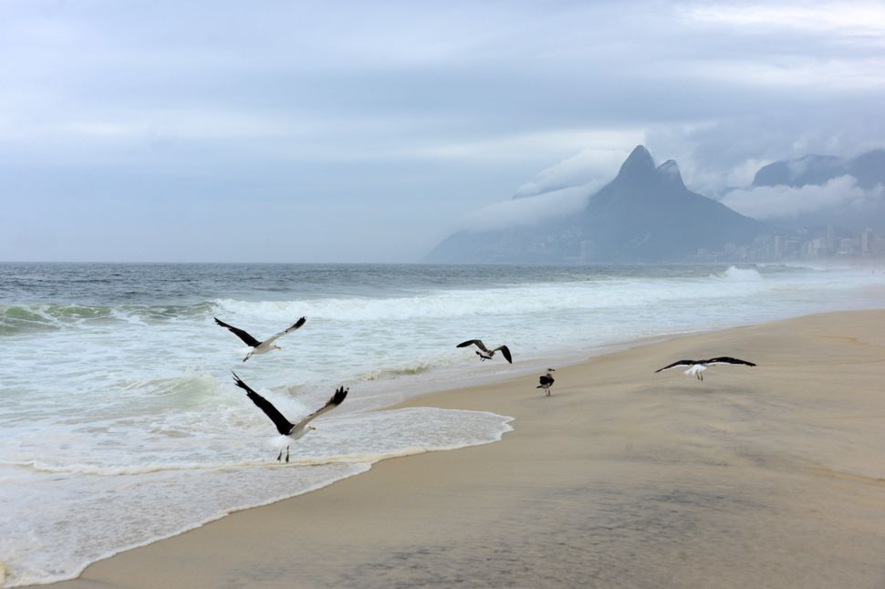 Seagulls fly in Ipanema beach on a cloudy day in Rio de Janeiro, on November 30, 2013 Brazil. (CHRISTOPHE SIMON/AFP/Getty Ima
