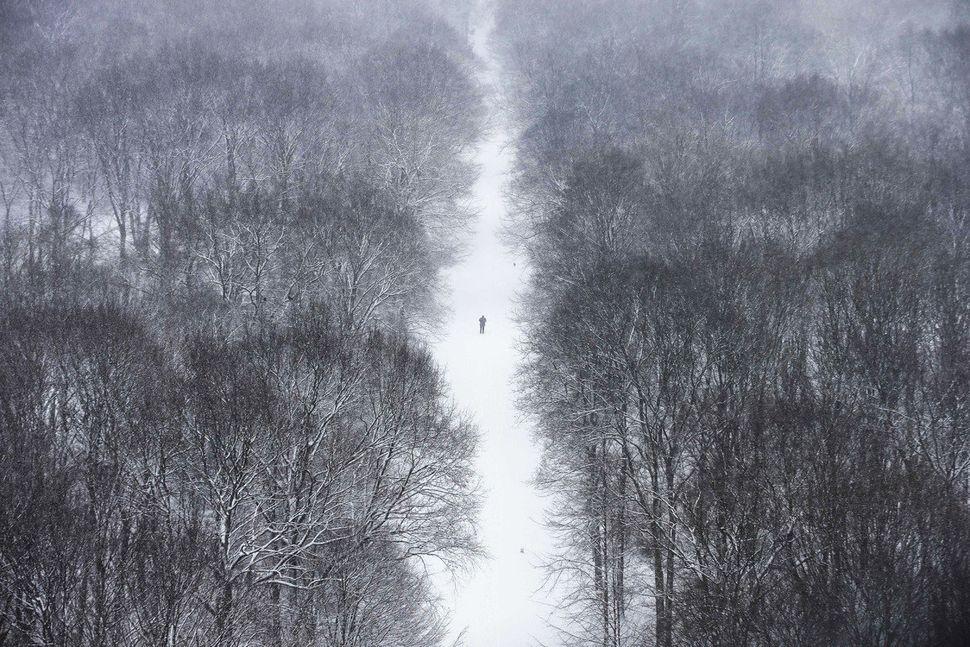 A man walks through the Tiergarten park after fresh snow falls hit Berlin, Germany, Tuesday, March 19, 2013. Unfriendly winte