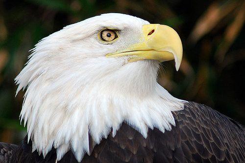 "Since December 1, <a href=""http://www.latimes.com/nation/la-na-utah-eagles-20131229,0,6836250.story#axzz2p4ZbvcpQ"" target=""_b"