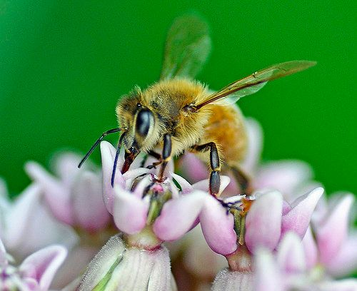 """Honeybees started dying off nearly a decade ago, but last winter, nearly <a href=""""http://science.time.com/2013/08/09/the-trou"""