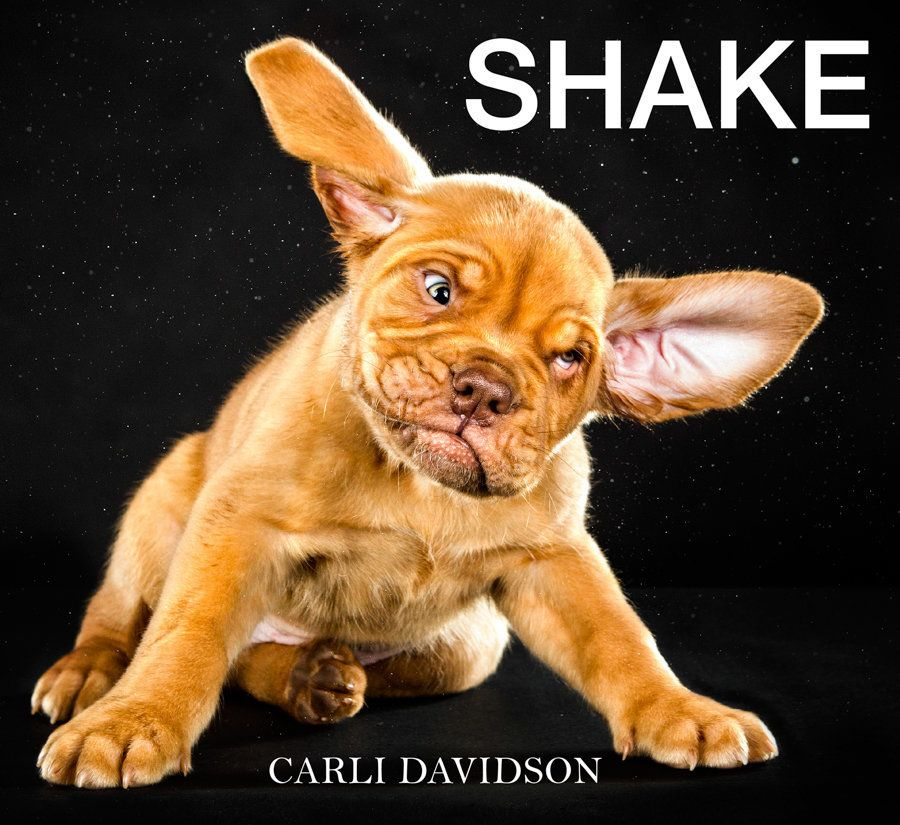 """Images courtesy of Carli Davidson. Learn more about the book """"Shake"""" <a href=""""http://www.shakethebook.com/"""" target=""""_hplink"""">"""