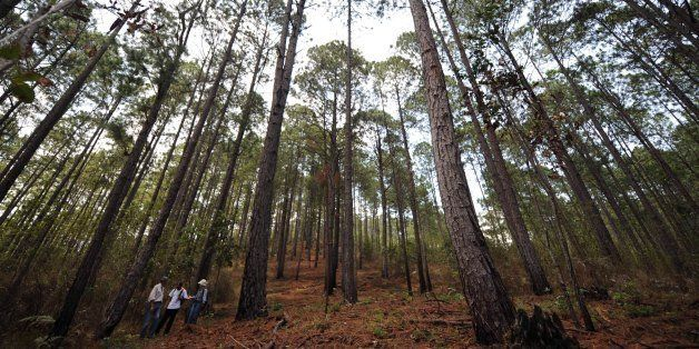 Tourists walk in the woods of Tatumbla muinicipality, Francisco Morazan department, 13 km east of Tegucigalpa, on April 21, 2