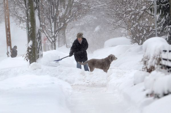 Michelle Kottke shovels snow with the help of her dog Harlee in Barrington, Ill., Thursday, Jan. 2, 2014. (AP Photo/Daily Her