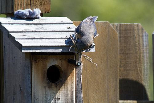 If you have local birds, they might appreciate lint as a nesting material -- in fact, they may already be lurking around your