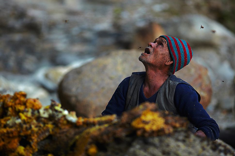 One of the Gurung men watches from the base of the cliff as the cutter repositions himself on the rope ladder 200ft above.