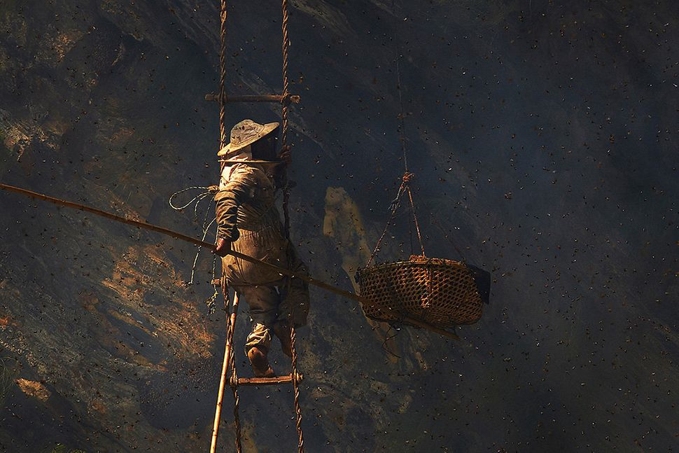 Using one of the bamboo poles known as a tango to push the basket hanging beside him up against the cliff face, the cutter ca