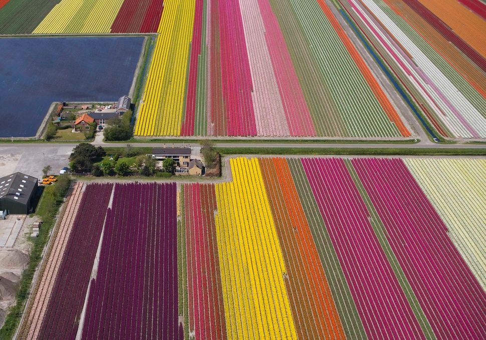 "This is not a close-up of a patchwork rug, but an <a href=""http://time.com/55595/these-aerial-photos-of-tulip-fields-in-the-n"