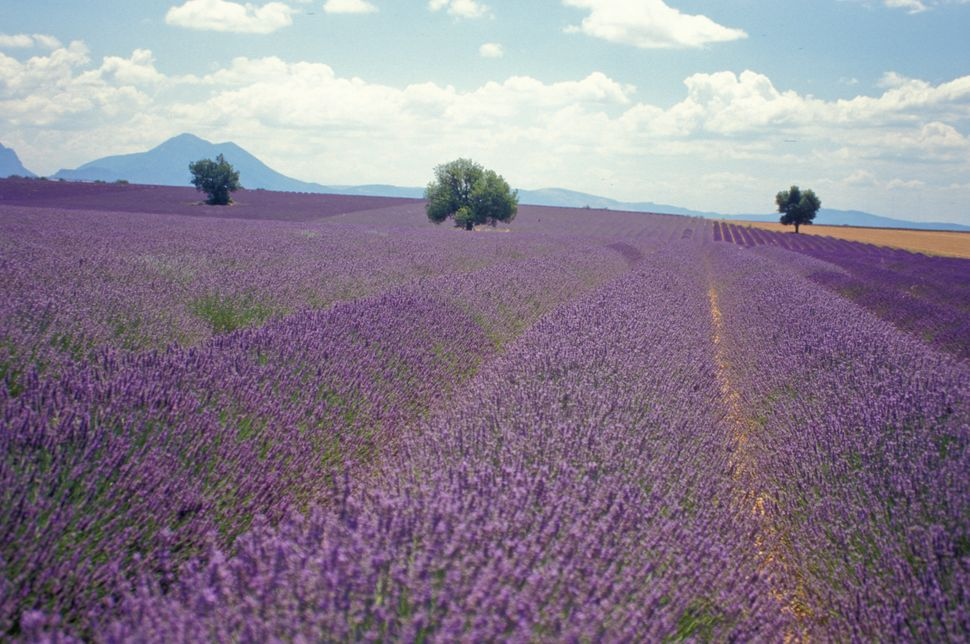 Lavender is not specific to France, but the potent plant makes for a whimsical scene in the already-enchanting countryside.