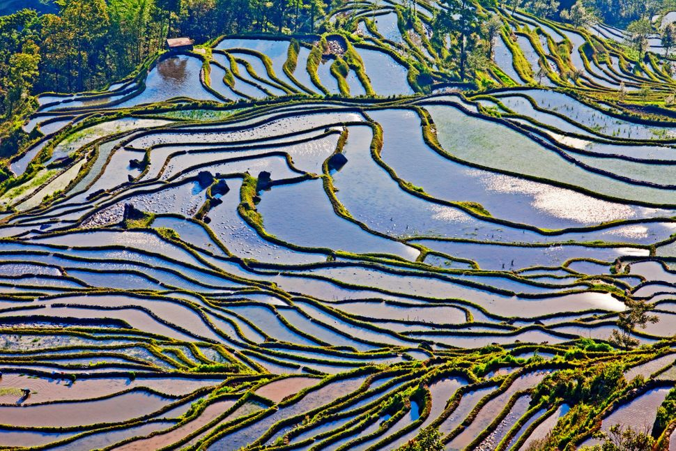 This is an aerial shot of terraced rice paddies in Yuanyang county. The landscape gets it textured shape from the varying mou