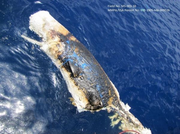 "It's difficult to measure just how many sperm whales were affected, but <a href=""http://www.motherjones.com/blue-marble/2012/"