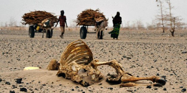 Wajir residents walks past carcasses of livestock on July 20, 2011 in Athibohol, North East of Nairobi. Close to 1.4 million