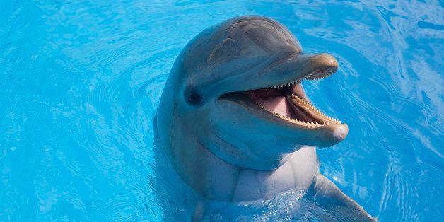 National Aquarium Considers Scrapping Dolphin Exhibit ...
