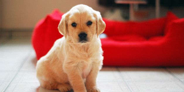 How to Fight a Puppy Mill | HuffPost