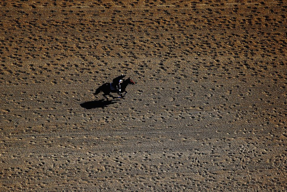ELMONT, NY - JUNE 06:  A horse warms up on the track at Belmont Park on June 6, 2014 in Elmont, New York.  On Saturday, June