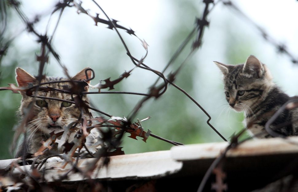 Cats lay on a fence of patrol service regiment of the National Guard of Ukraine based in eastern Ukrainian city of Lugansk af