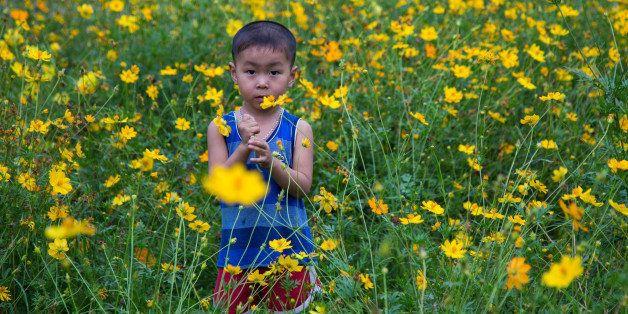 HUE, VIETNAM - 2014/04/17: Vietnamese boy child playing among daisy flowers. (Photo by John S Lander/LightRocket via Getty Im