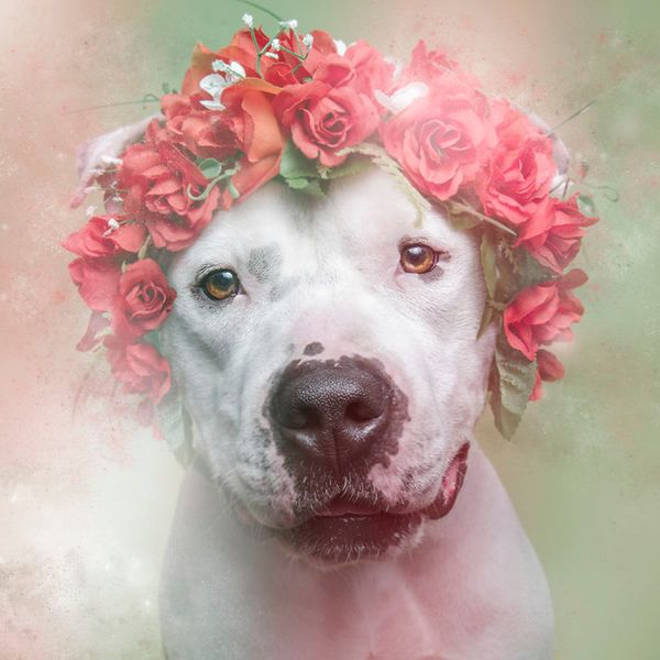 """Rex is available for adoption through <a href=""""http://nyanimalrescue.org/"""" target=""""_blank"""">Sean Casey Animal Rescue</a>"""