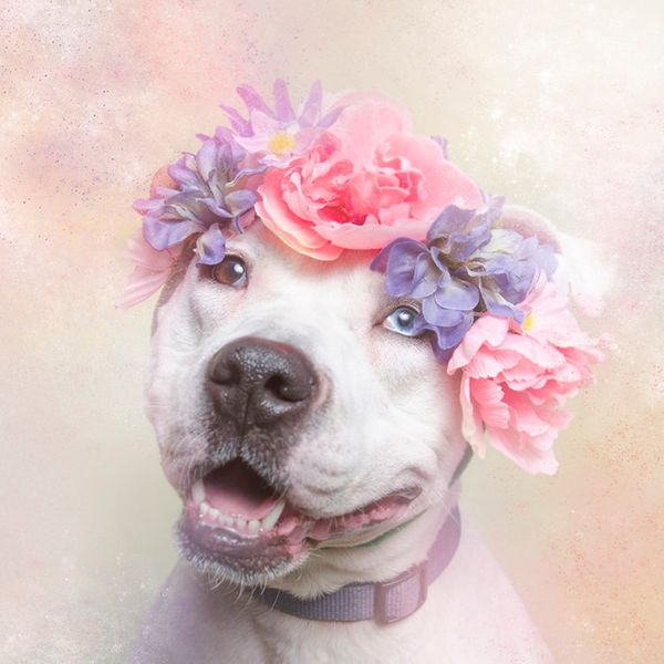 """Cali is available for adoption through <a href=""""http://nyanimalrescue.org/"""" target=""""_blank"""">Sean Casey Animal Rescue</a>"""