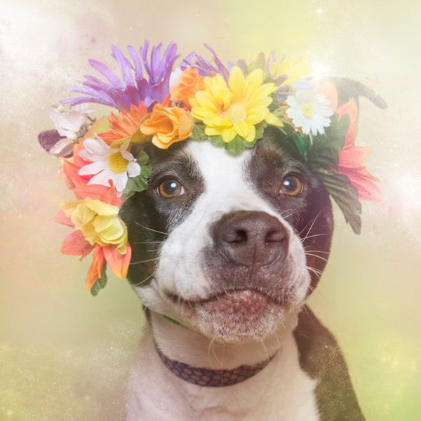 """Jellybean is available for adoption through <a href=""""http://nyanimalrescue.org/"""" target=""""_blank"""">Sean Casey Animal Rescue</a>"""