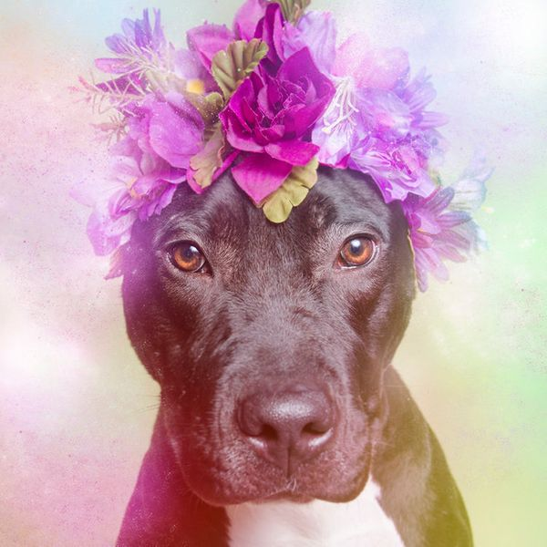 """Athena is available for adoption through <a href=""""http://nyanimalrescue.org/"""" target=""""_blank"""">Sean Casey Animal Rescue</a>"""