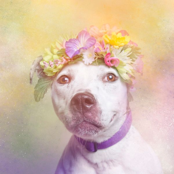"""Erica is available for adoption through <a href=""""http://nyanimalrescue.org/"""" target=""""_blank"""">Sean Casey Animal Rescue</a>"""