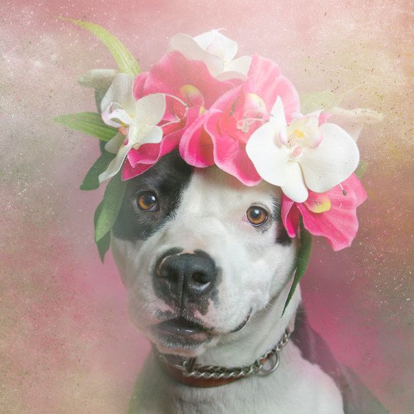 """Fancy is available for adoption through <a href=""""http://www.nycsecondchancerescue.org/"""" target=""""_blank"""">Second Chance Rescue<"""