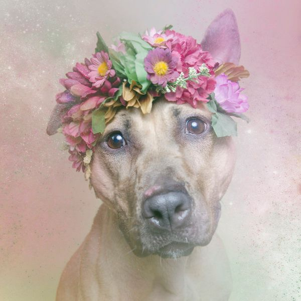"""Regina is available for adoption through <a href=""""http://nyanimalrescue.org/"""" target=""""_blank"""">Sean Casey Animal Rescue</a>"""